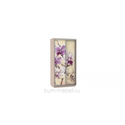 Шкаф-купе двухдверный 120 см (дуб молочный/орхидея)